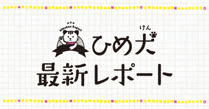 えひめ犬 最新レポート